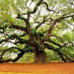 Что значил дуб для норманских племен?
