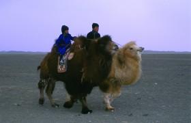 Монгольский ритуал, раскрывающий материнство у животных